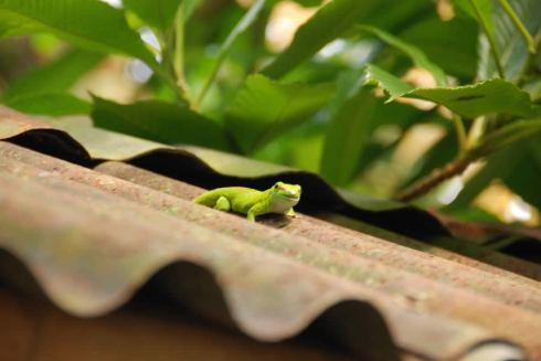 Madagascar pt2